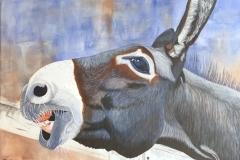 """""""Apple Jack"""" the Donkey"""