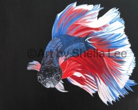"""Serenity-SOLD This Betta fish is painted with acrylic on a 16"""" x 16"""" Gallery Wrapped Canvas"""