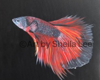 """Tranquility is a betta fish painted in Acrylic on a 16"""" x 16"""" Gallery Wrapped Canvas.$130.00"""