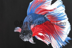 "Serenity-SOLD This Betta fish is painted with acrylic on a 16"" x 16"" Gallery Wrapped Canvas"