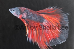 "Tranquility is a betta fish painted in Acrylic on a 16"" x 16"" Gallery Wrapped Canvas.$130.00"