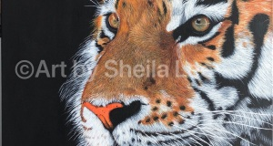 SOLD Tiger-Lilly