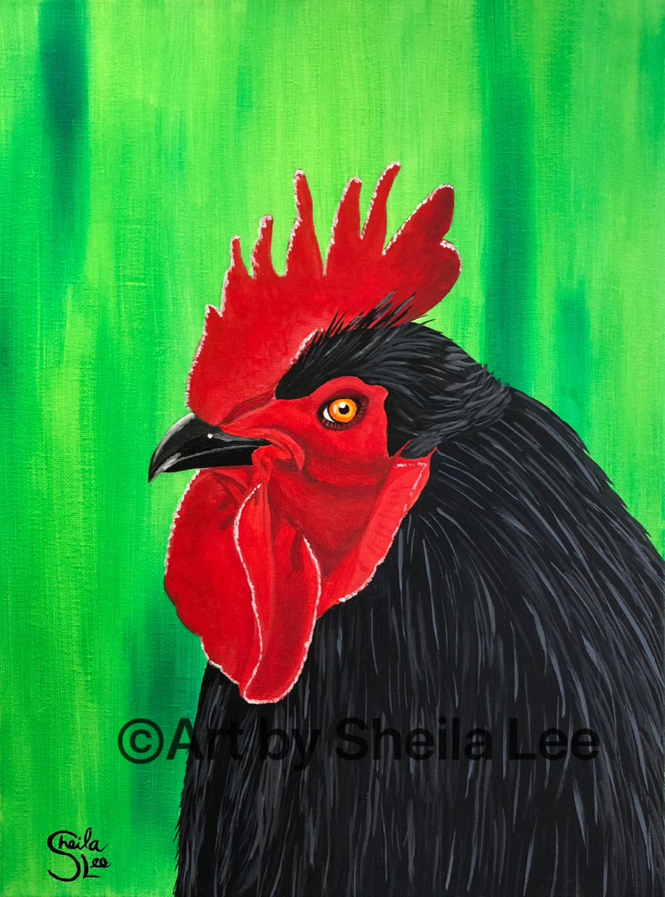 """'Rocky the Rooster"""""""